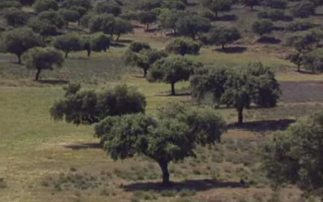 """País de Quercus """" Una selva domesticada"""""""